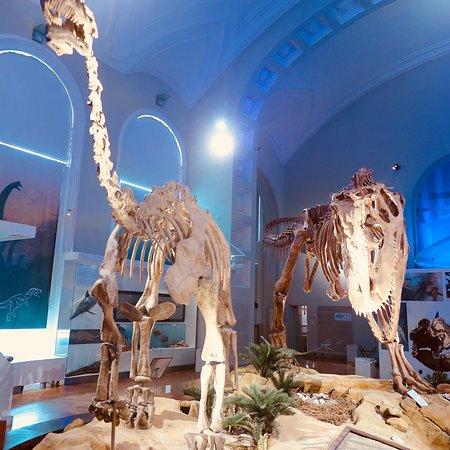 Luonnontieteellinen museo: photo2.jpg
