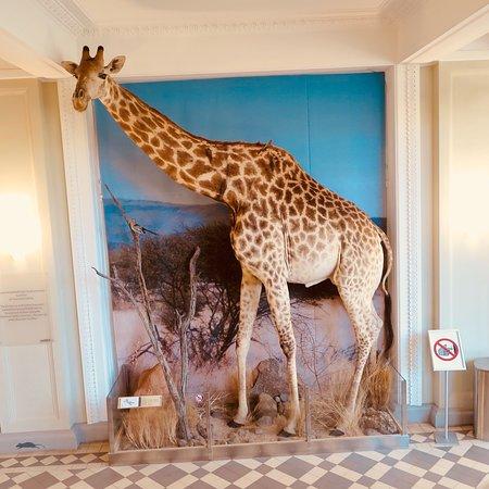 Luonnontieteellinen museo: photo3.jpg