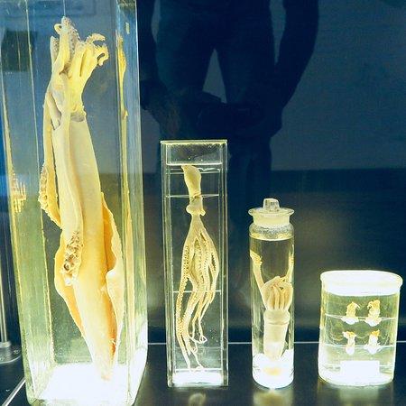 Luonnontieteellinen museo: photo4.jpg