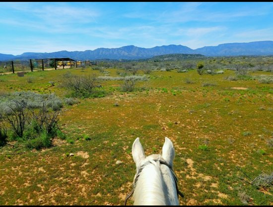 "Camp Verde, AZ: ""For one to fly, one needs only to take the reins.""  ~ Melissa James"