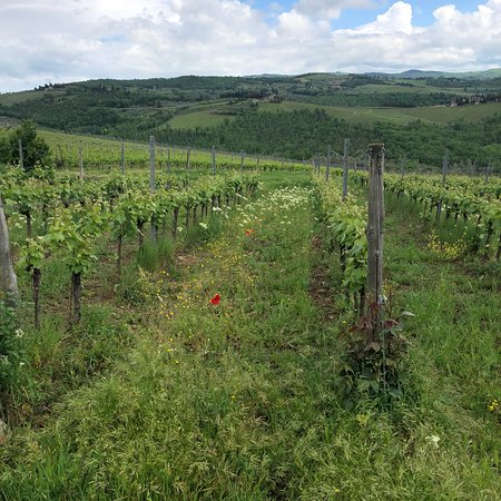 Taste of Chianti: Tuscan Cheese, Wine and Lunch from Florence Φωτογραφία
