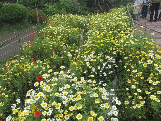 Batasia Loop: flowers