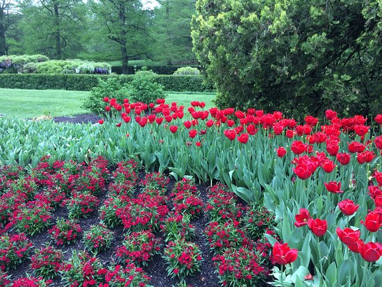 Kennett Square, Pensilvania: Perfect timing for tulips.