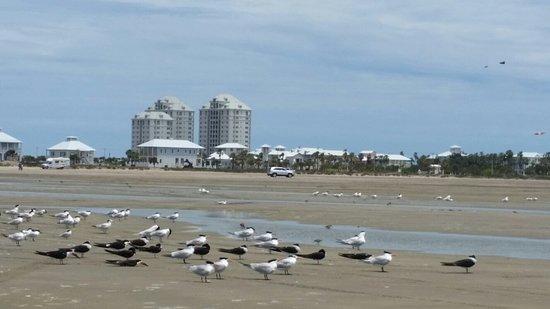 Hilton Garden Inn South Padre Island: 20180429_130611_large.jpg
