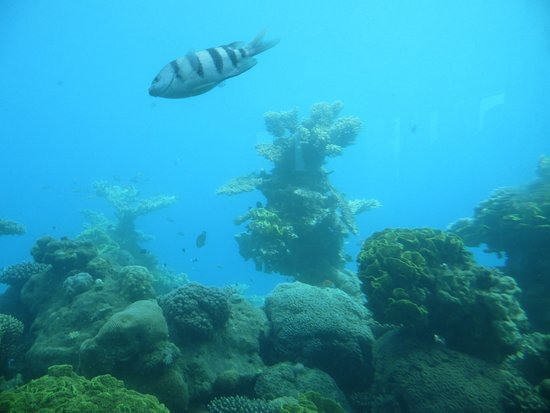 Underwater Observatory Marine Park: From the underwater observitory