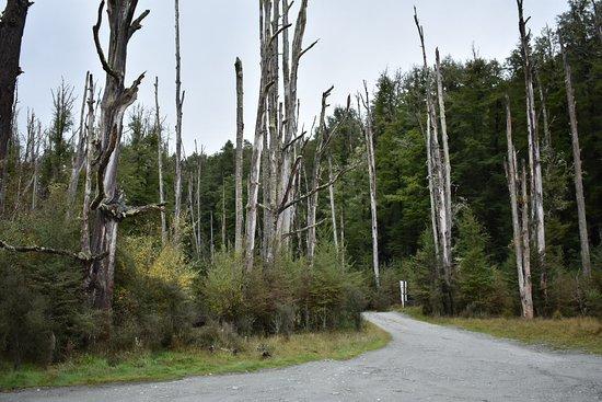 Alpine Adventures: cool looking trees near where hobbit was filmed