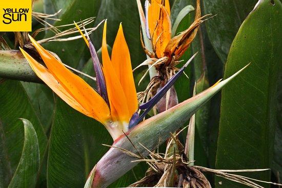 Visite Jardin Creole Sa Flore Exotique Oiseau Du Paradis Picture
