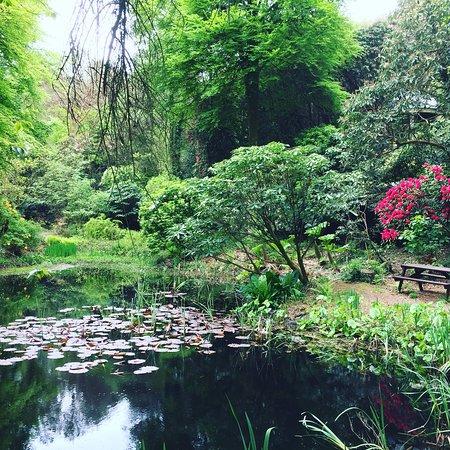 Portmeirion, UK: photo6.jpg