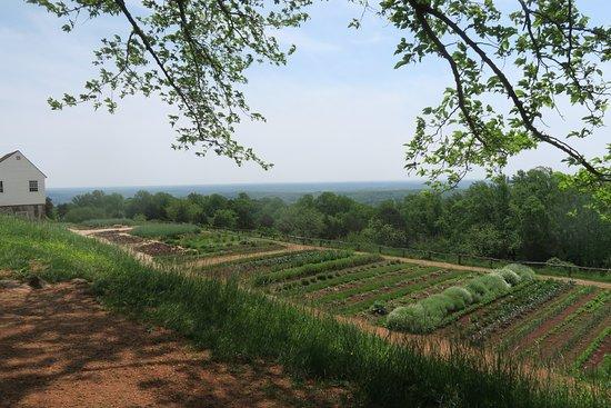 มอนติเซลโลของโธมัสเจฟเฟอร์สัน: Monticello's vegetable gardens