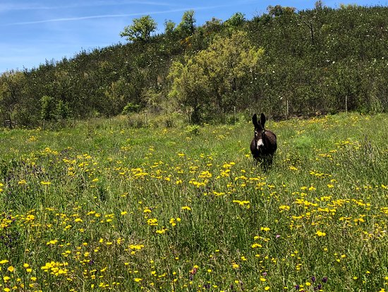 Rota Vicentina : Immer wieder Esel und Pferd begegnet