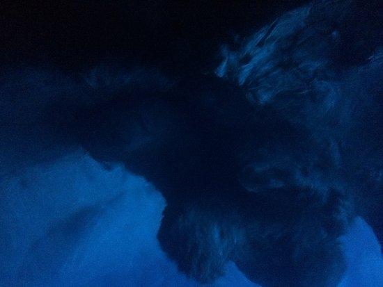 私人蓝洞和赫瓦尔 - 5岛游照片