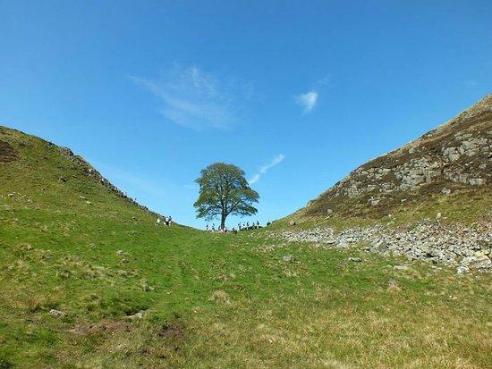 Northumberland National Park照片