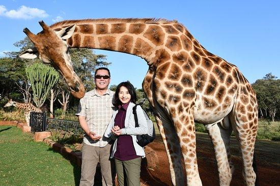 Giraffe Manor - afternoon tea with the Rothschild's Giraffes