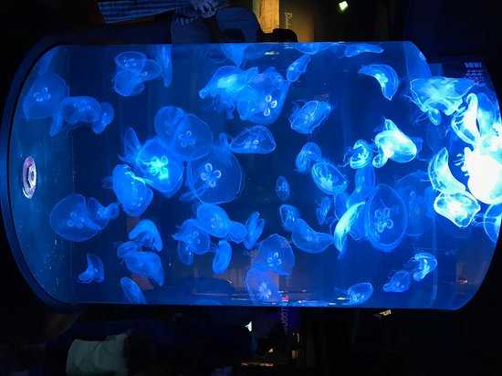 Kure Beach, NC: jellyfish