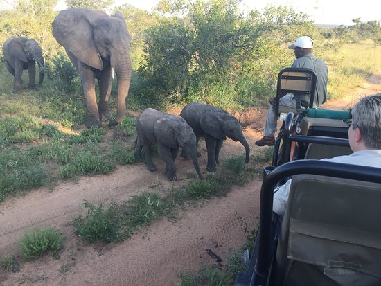 Timbavati Private Nature Reserve, Sudafrica: Baby elephants approach vehicle