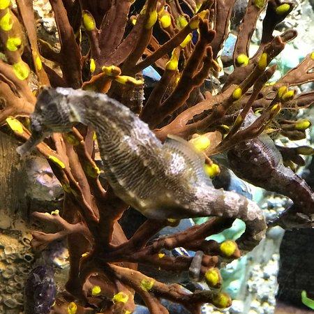 New England Aquarium Φωτογραφία