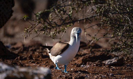 Don Mammoser  Photo Day Tours: My Blue Footed Booby friend was just excited to say hi
