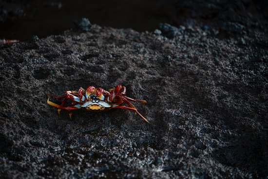 Don Mammoser  Photo Day Tours: Crab meet