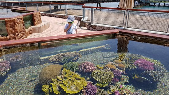 Underwater Observatory Marine Park: Аквариумы под открытым небом