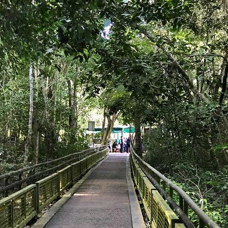 Cataratas del Iguazu - Lado Argentino Φωτογραφία