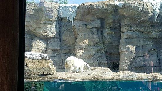 Kansas City Zoo: 20180518_103533_large.jpg