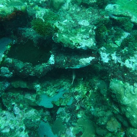 Dive and Green Εικόνα