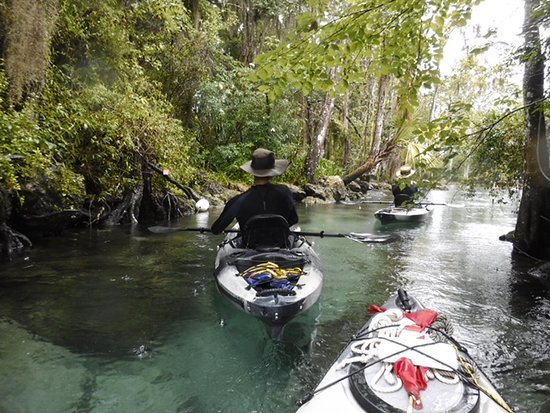 Fun 2 Dive Manatee Tours: Paddling into Three Sisters Spring