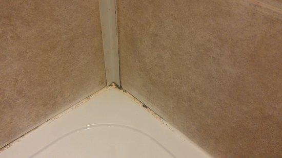 Longhope, UK: Mouldy shower