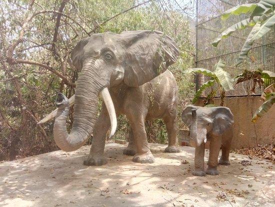 Zoologico de Vallarta: IMG_20180513_121838_large.jpg