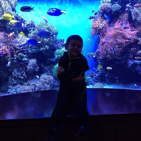 Bilde fra Monterey Bay Aquarium