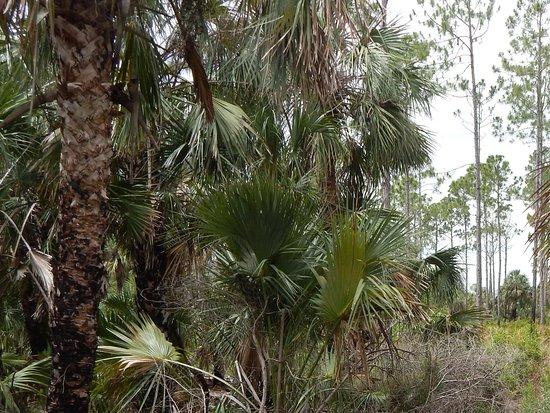 Withlacoochee Gulf Preserve: Scenery along Boardwalk