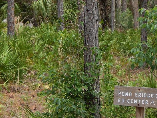 Withlacoochee Gulf Preserve: Scenery & Sign along Boardwalk