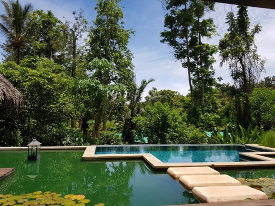 Siddapura, India: Private Infinity Pool