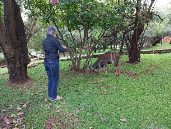 بلايد ريفر وايلدرنس لودج: We got to hang out with these beautiful nyala on the lawn outside our room