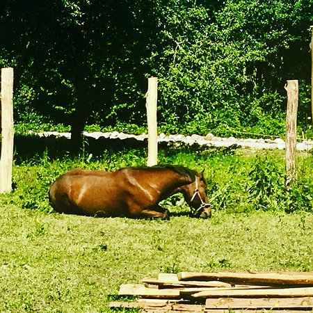 Velika Plana, Kroatia: Happy Horses, and very Happy Guests!