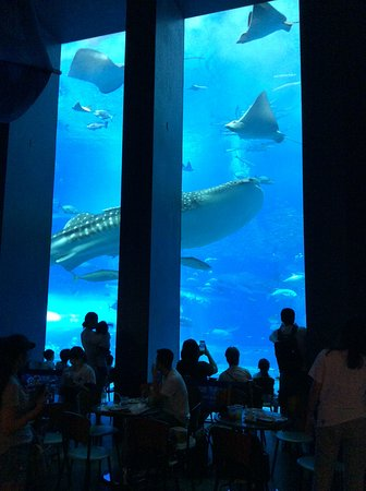 Okinawa Churaumi Aquarium: Main Tank with Cafe dinners watching on