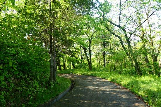 Furushiroyama Castle Ruins (Furushiroyama Park): 帰りはこのなだらかな坂道でのんびり帰ると良いですね。