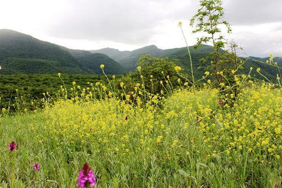 Mtskheta-Mtianeti Region, Gruzja: Georgian nature