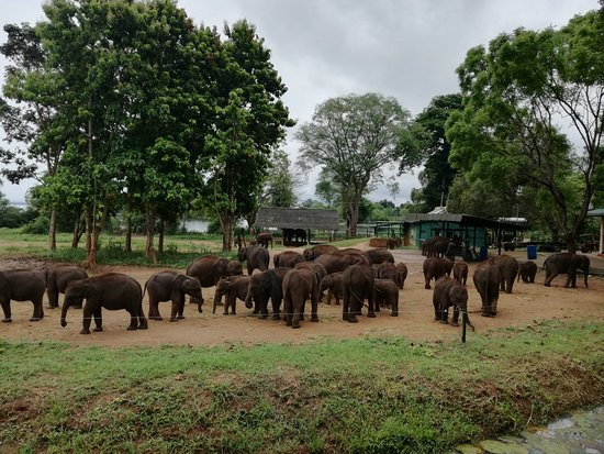 Udawalawa, Sri Lanka: IMG_20180517_121451_large.jpg