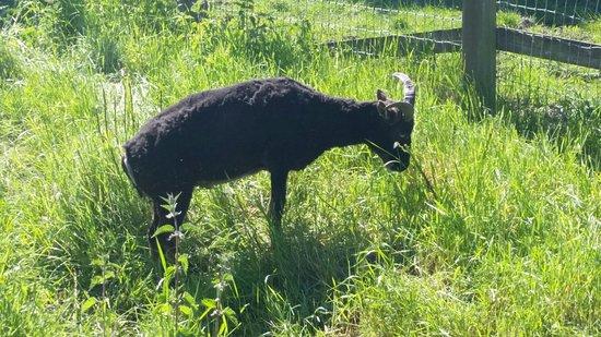 Fox Burrow Farm