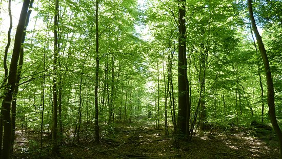 Naturpark Elm Lappwald