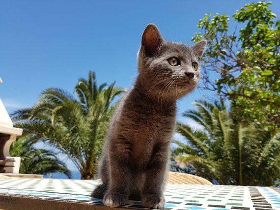 Villa Sauci: fauna locale