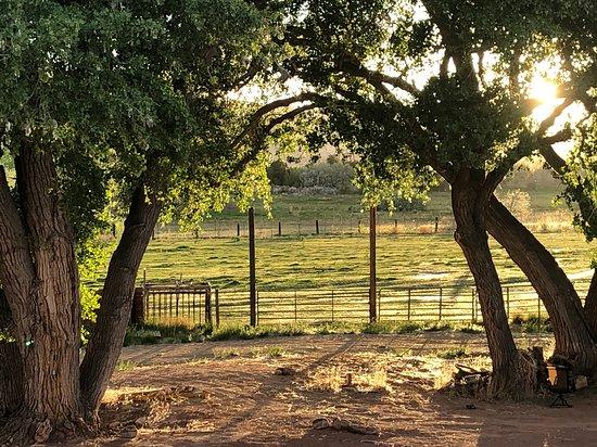 Sunlit Oasis: The pasture at sunset