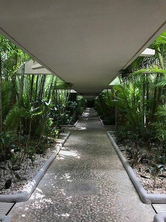 Presidente Inter-Continental Cozumel Resort & Spa: Covered, tropical walkways.