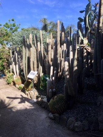 Giardini Ravino: Giardini garden