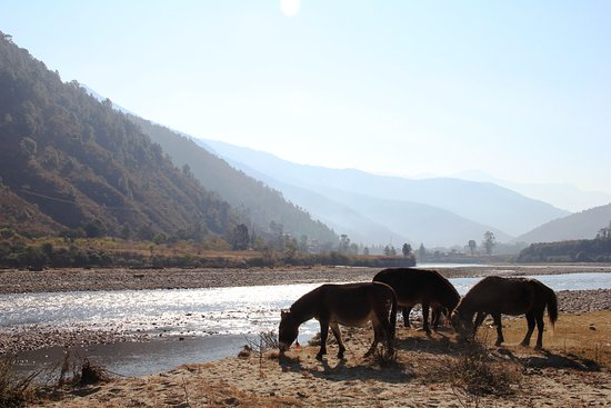 Paro District, Μπουτάν: Loved all of the beautiful views and local wildlife.