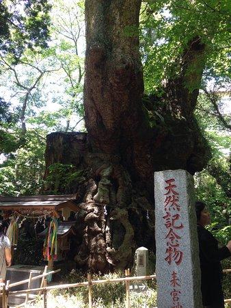 來宮神社照片