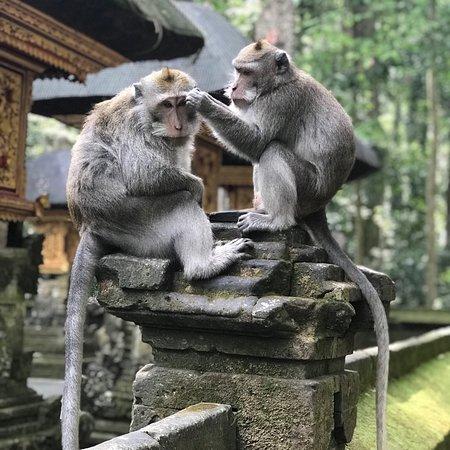 Sangeh, Ινδονησία: photo0.jpg