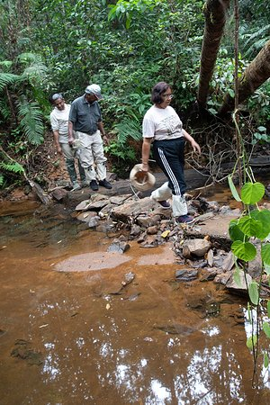 Sinharaja Forest Reserve: Crossing a creek