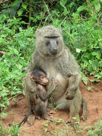 Akagera National Park صورة فوتوغرافية